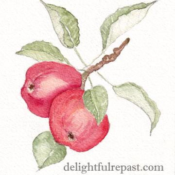 Apple Galette - Rustic Apple Tart (this image, my watercolor sketch of apples on branch) / www.delightfulrepast.com