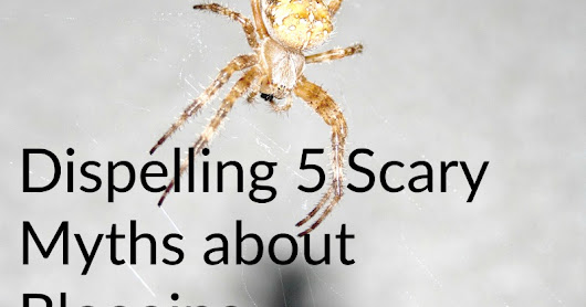 Dispelling 5 Scary Myths about Blogging