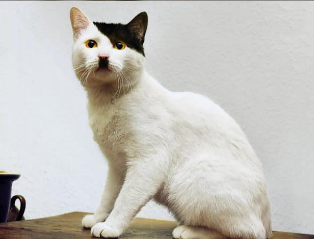 القط يشبه هتلر تمامًا ,صور قطط,صور عن القطط,قطط مضحكة ,قطط جميلة ,قطط كيوت