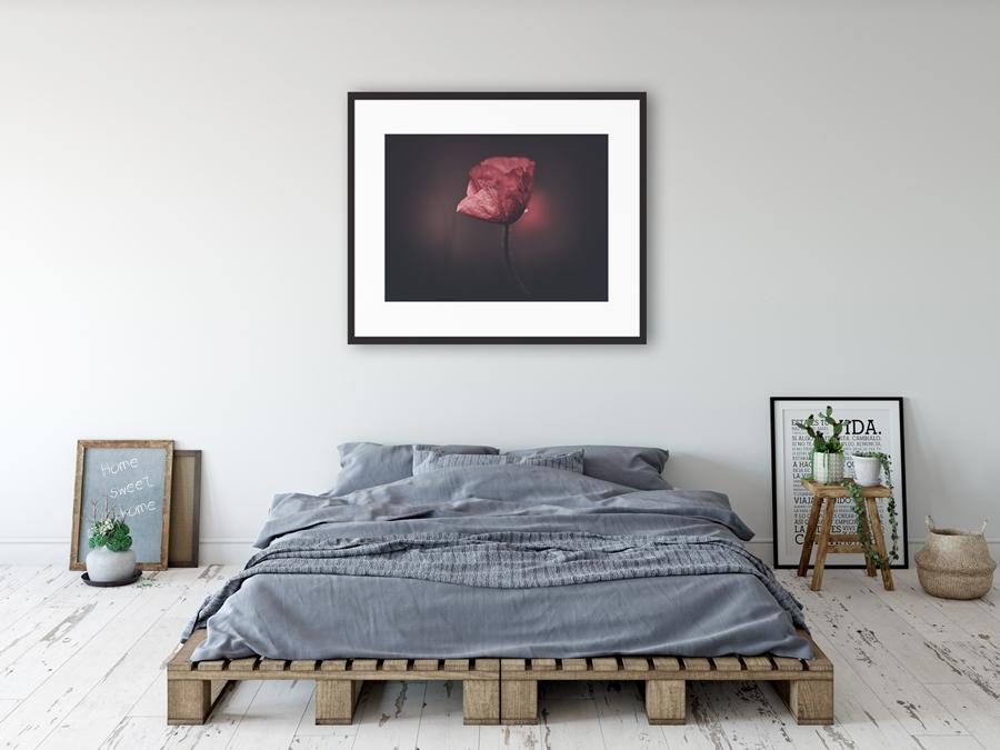 plakaty, plakaty przyrodnicze, plakat przyrodniczny, wall decor, plakat z kwiatami