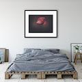 Plakaty przyrodnicze Anja Fotografia - wystrój ze mną swoje wnętrza :)