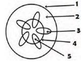 Gambar contoh soal UAS ganjil