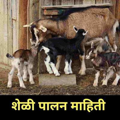 Goat Farming Information in Marathi