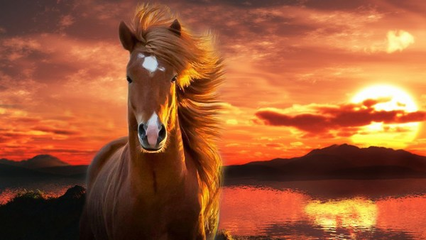 Brown Horse Images HD Free Download
