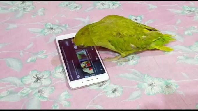 आपने देखा कभी डिजिटल इंडिया का डिजिटल तोता-जो चलाता है यूट्यूब देखता है अपनी पसंद की-वीडियो देखने के लिए लिंक पर क्लिक करें