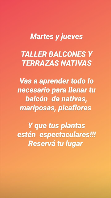 Taller BALCONES Y TERRAZAS NATIVAS