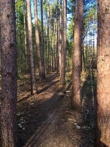 Hiking Along the Ice Age Trail Scuppernong Segment near Ottawa WI