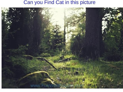 Picture Puzzle to Find Hidden Cat