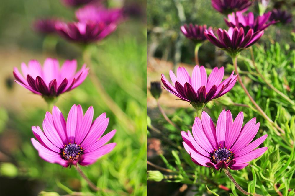 Perbandingan foto dengan aperture berbeda