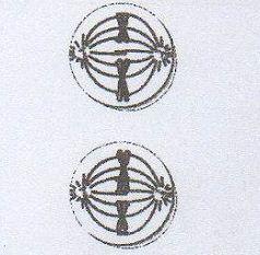 Perhatikan gambar meiosis berikut! Ciri yang tepat pada ...