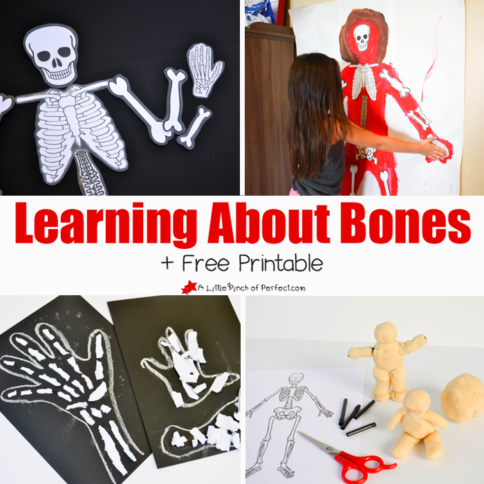 graphic relating to Printable Skeleton Bones referred to as Discovering Relating to Bones Routines for Young children and Free of charge Skeleton
