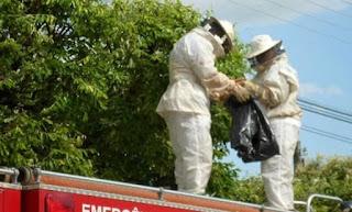 Corpo de Bombeiros orienta sobre cuidados em relação a ataques de abelhas