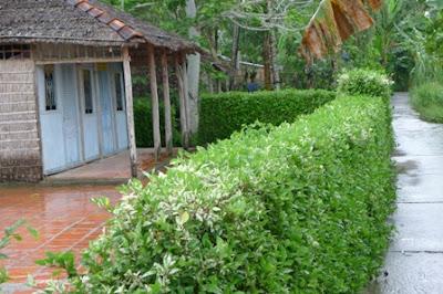 Hàng rào quê hương phong thủy