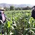 SEFOA IMPULSA PRODUCCIÓN AGRÍCOLA EN ZONA ORIENTE CON MÁS DE 18 MDP EN APOYO