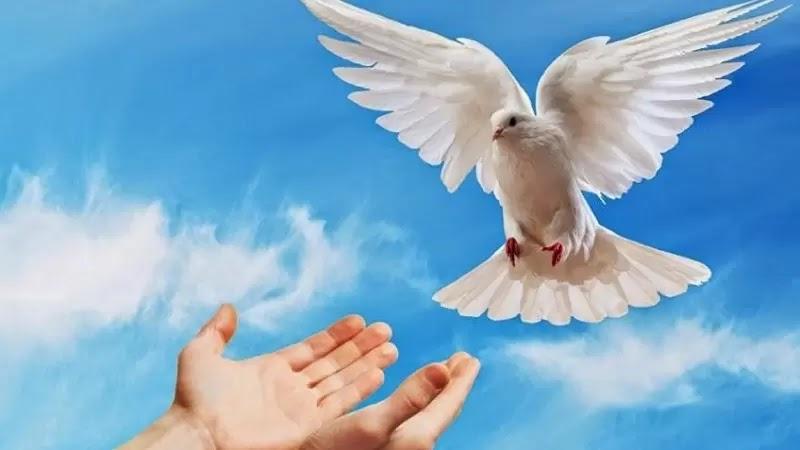 Série: Estudo Do Espírito Santo (7)