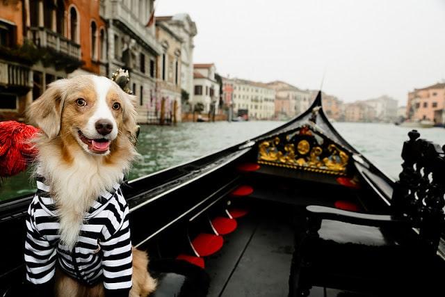 viajar cachorro gato