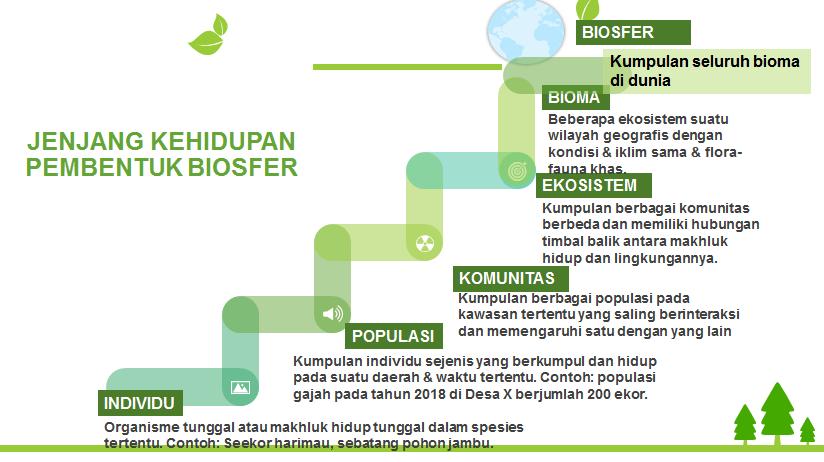 Biosfer dan karakteristik bioma di dunia - Bumi Ku Biru Hijau