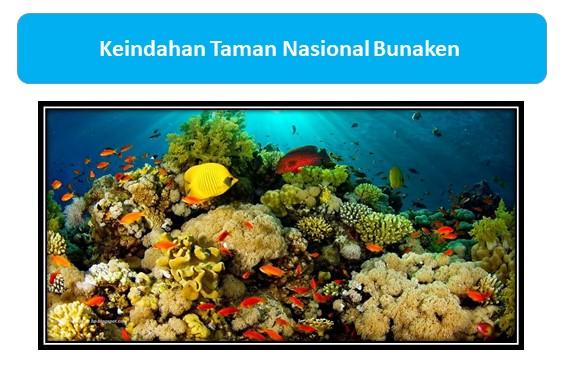 Keindahan Taman Nasional Bunaken
