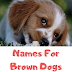 Best Names For Brown Dogs | 500 Cool and Cute Names for Your Dog