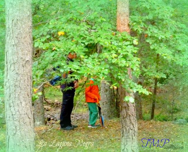 salir naturaleza bosques paseos