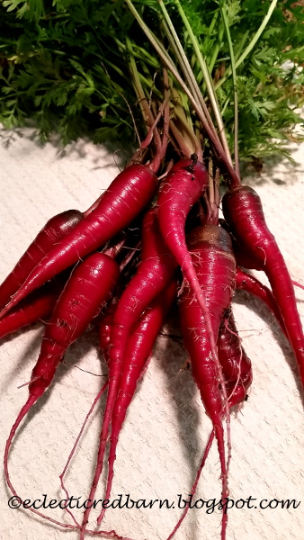 Eclectic Red Barn: Home Grown Red Carrots