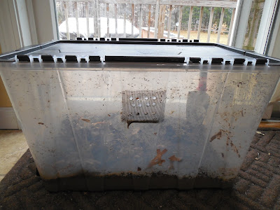 DIY vermicomposting bin worm composting