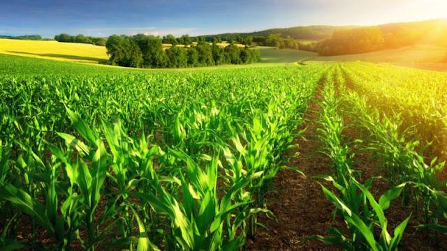 Αγροτικά Νέα: μια ματιά στην Ευρώπη