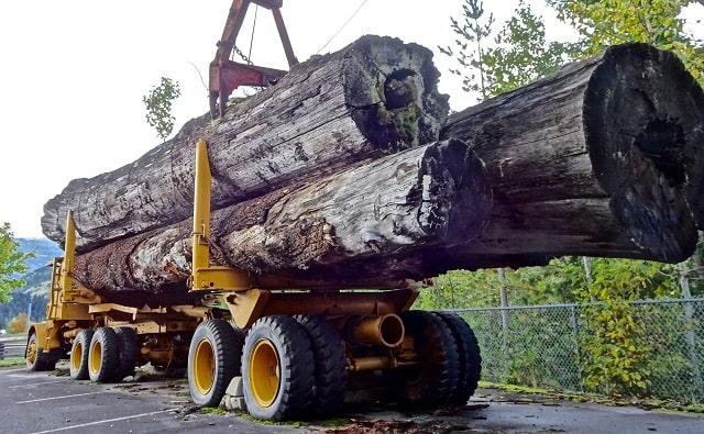 trucker liability logging truck accident trucking crash lawsuit
