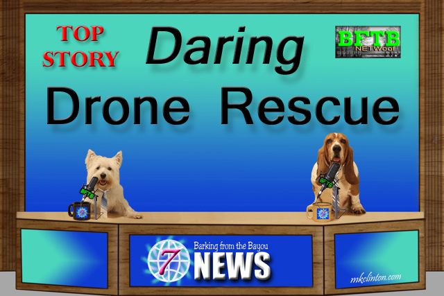 Dog news anchors with top story on Daring Drone Rescue