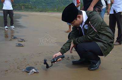 Lepas Tukik ke Laut, Wabup Arifin Berharap Agar Habitatnya Terus Terjaga