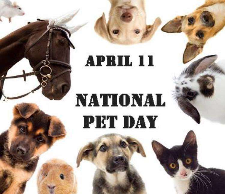 National Pet Day Wishes Images download