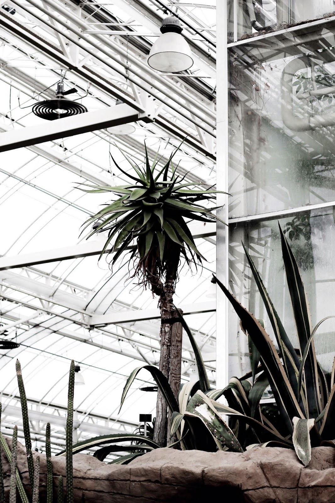 Glasshouse Photography in the UK