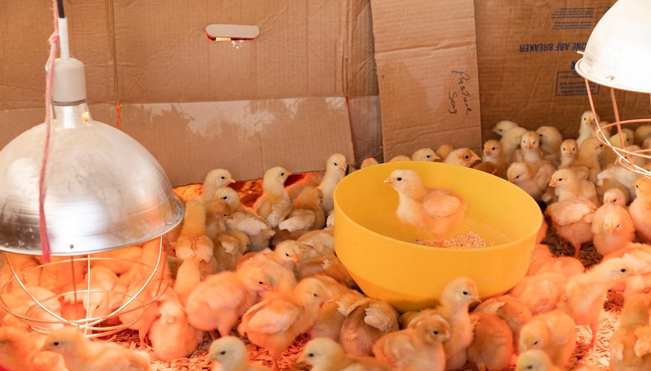 Avícolas y Granjas