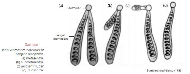 Inilah Jumlah Kromosom Makhluk Hidup