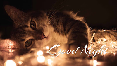 {LATEST} Cute Good Night Images 2019