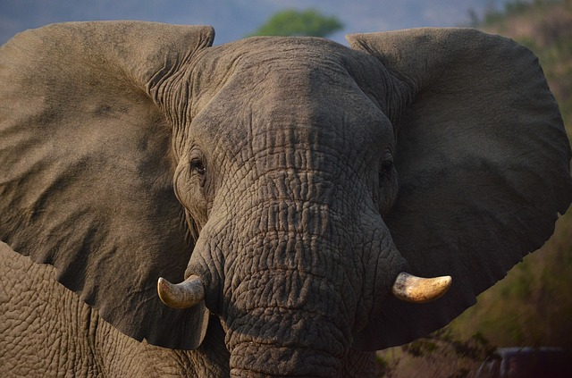 https://www.bioorbis.org/2019/02/por-que-elefantes-voadores.html