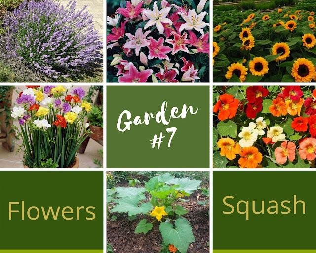 Rock-n-Zen Garden Plot #7 plants identification.