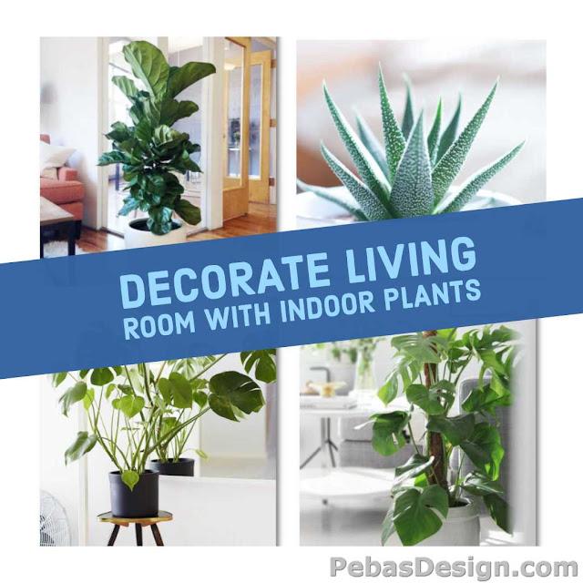 Indoor plant decor