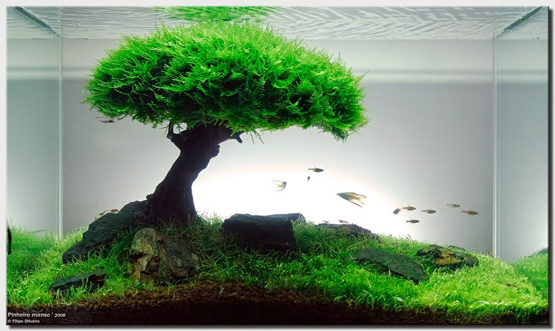 Hồ thủy sinh cây bon sai trồng rêu