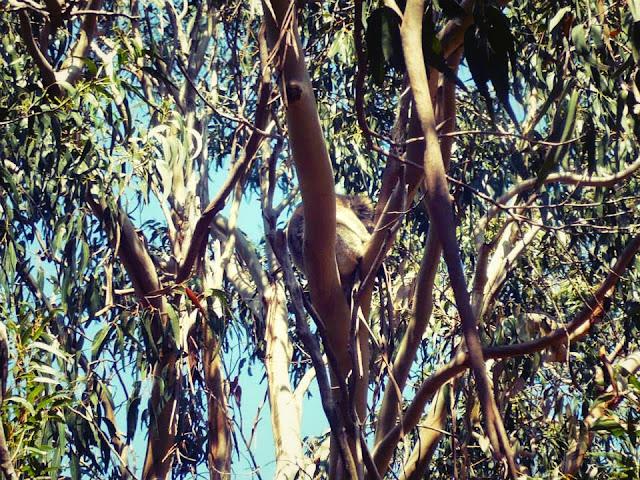 is kangaroo island worth visiting