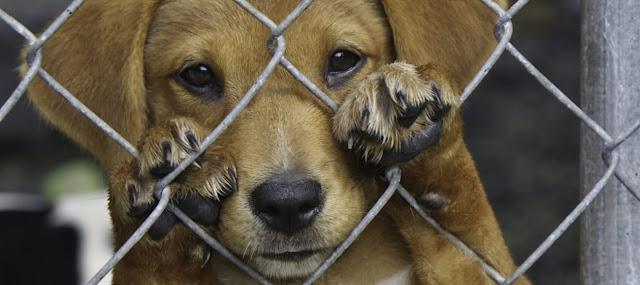 ¿Dónde denunciar el maltrato animal en Puebla?