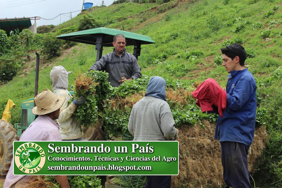 Agro Finca Salas Pozo de Rosas Estado Miranda