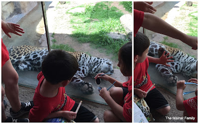 Jackson sitting next to a glass enclosure with a sleeping jaguar on the other side. The jaguar has one of his paws pressed against the glass and Jackson has his hand pressed against the glass over the jaguar's paw, as if comparing the size.