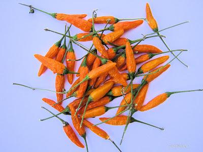 Καυτερές πιπεριές-Φαρμακευτικές ιδιότητες