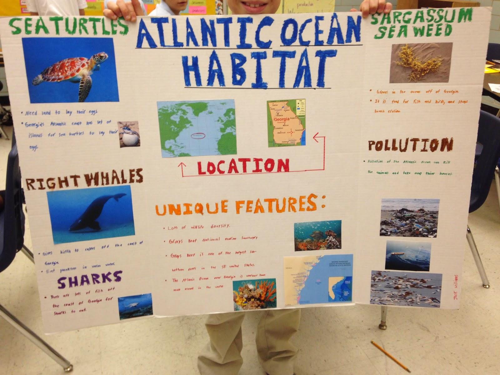 Mrs Soons 4th Grade Marketplace And Habitats