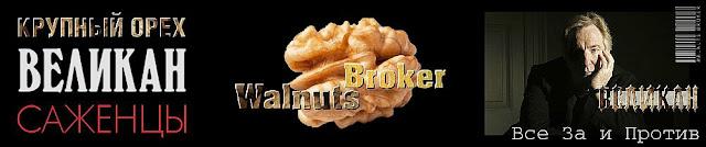 Грецкий орех сорт  Великан, 0957351986, 0985674877, Walnuts Broker