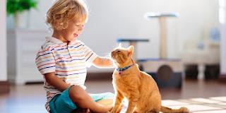 ¿Cómo afecta el tener un gato a la inteligencia del niño?