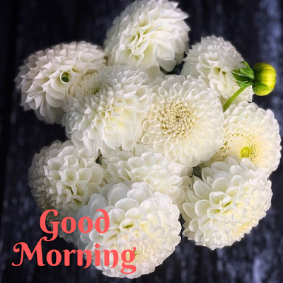 good morning flowers HD wallpapers
