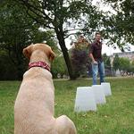 slalom com cães