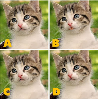 Which image is different? image 12